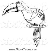 Stock Cartoon of a Black and White Perched Toucan Bird by Dero