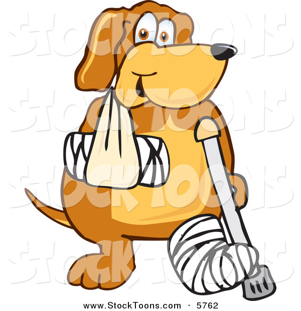 Stock Cartoon of a Hurt Brown Dog Mascot Cartoon Character with an Arm and Leg Bandaged up
