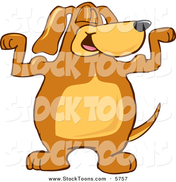 Stock Cartoon of a Proud Brown Dog Mascot Cartoon Character Flexing His Bicep Arm Muscles
